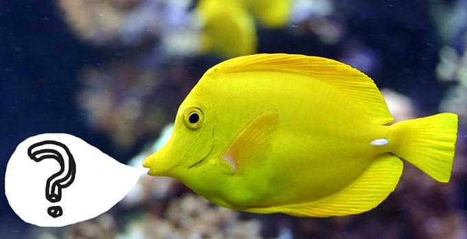 fish-in-the-sea-funny